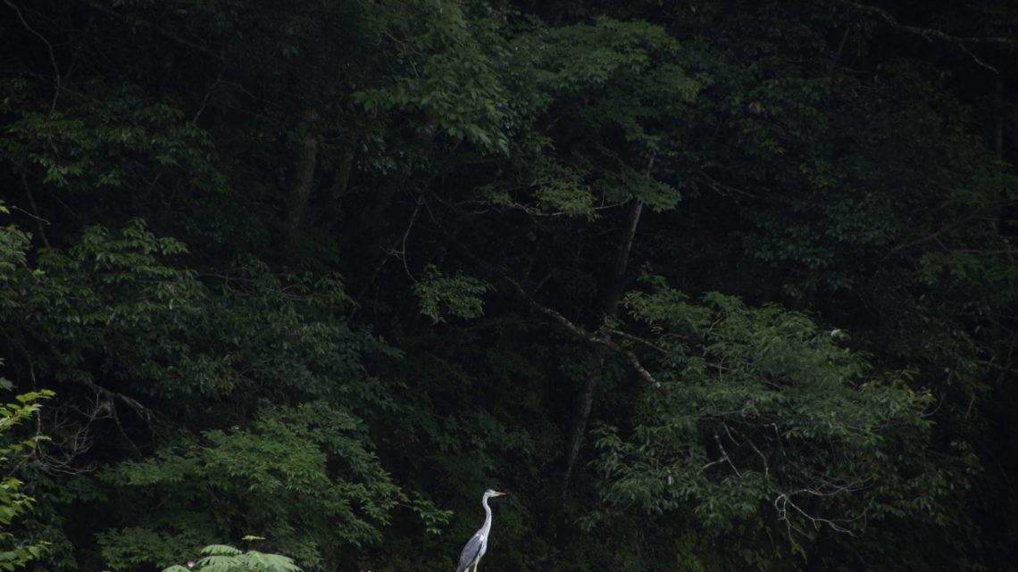 Kamiyama – 神山町 – Spirit Mountains